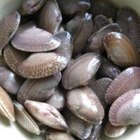 花甲螺-南宁食材配送