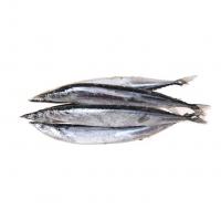 桂平秋刀鱼